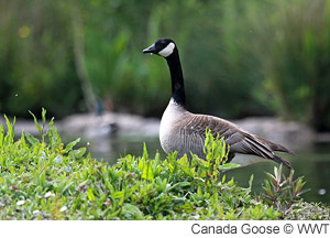 otherwork_canadagoose